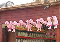 10 pigs
