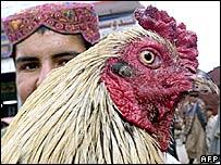 A chicken vendor in a market in Pakistan's Quetta city