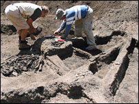 Excavation (URI News Bureau)