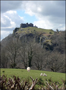 New lambs at Carreg Cennen Castle, Carmarthenshire (Jennifer Cloke)