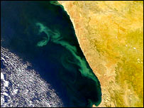 South Africa algal bloom   Image: Nasa