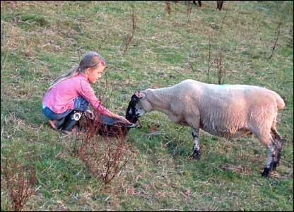 Sarah Hunt took this picture of Morwenna, a friend's daughter, feeding a sheep in Llanhennock, near Caerleon