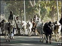 Cow farmers in India