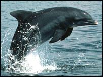 Delfín (imagen de Randall Wells)