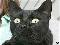 Cat (generic)