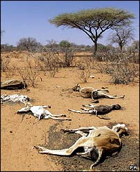 Dead cattle who have starved to death in the recent drought in Kenya