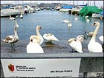 Birds on Lake Geneva