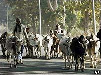 Pastores en India.
