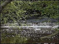 River Alne