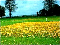 Park Grass Experiment (Rothamsted Research)