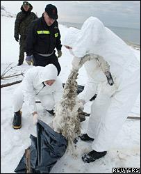 Polish officials place a dead swan in a plastic bag