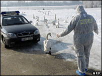 Police in protective gear with swans at the Vistula River