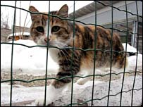 File photograph of a cat at the Noah's Ark shelter in Graz, Austria