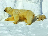 Polar bear with cub from BBC series 'Planet Earth' �Jason Roberts