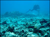 Collapsed coral reef in Seychelles, University of Newcastle