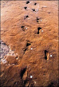 Footprints of two fugitives recorded in ash deposit (PNAS)