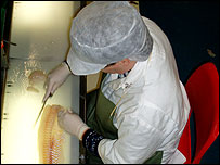 A worker at Bruno Detcheverry's fish processing plant