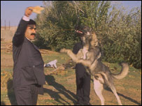 Huseyin Baybasin playing with his dogs