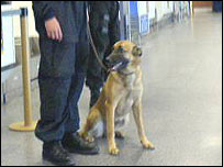 Airport security and dog