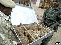 Tortoises intercepted at Kenya's International Airport