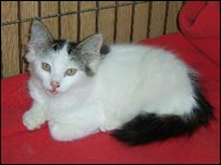 Mele the cat (pic courtesy of RSPCA)