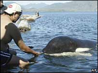 People try to pet killer whale Luna. File photo