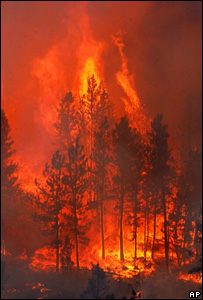File image of a forest fire (Image: AP)