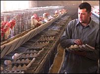 Egg far in Lebanon