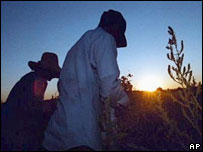 Hispanic farmers work the field in Idaho (archive picture)