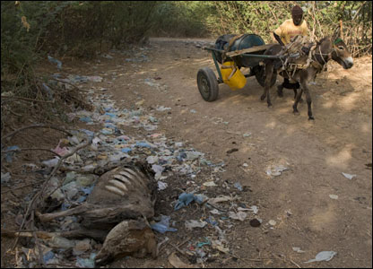 A donkey-drawn cart with a barrel of water passes a dead donkey (Photo...