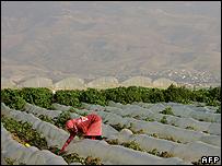 Farm in the Jordan valley