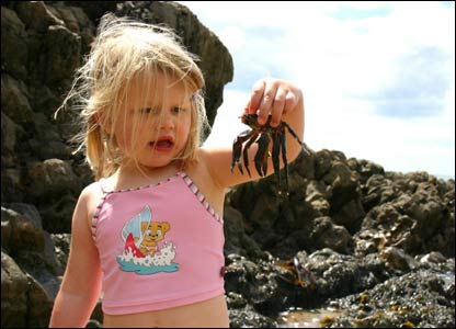 Jim Young's granddaughter Caitlyn being very brave with a crab at Langland