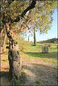 Parque Federico García Lorca.