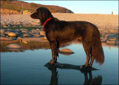 Arthur at Southerndown, as sent by Mark Young