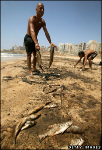 Men clearing up dead fish from a beach (Getty Images)