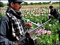 Afghan police eradicate poppy fields