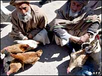 Chicken sellers in the Afghan capital Kabul