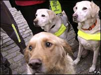 Guide dogs, PA