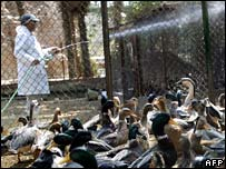 An Egyptian zookeeper sprays disinfectant in duck cages
