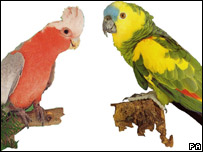 Two exotic birds