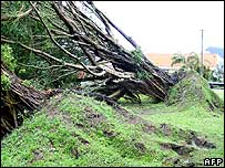 Fallen trees near Cairns, Australia