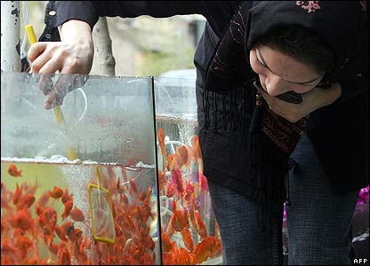 Iranian woman picks out goldfish in Tehran