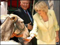 Camilla and a donkey