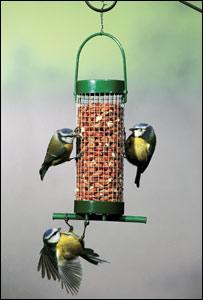 Blue tits on a peanut feeder