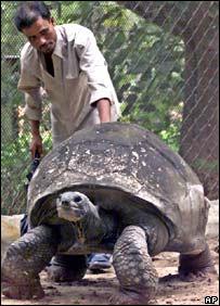 Адвайта, 'единственный', в зоопарке Калькутты. 2005 год