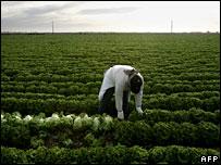 Immigrant farm worker