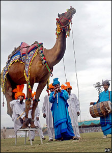 A Pakistani camel owner sits under his camel