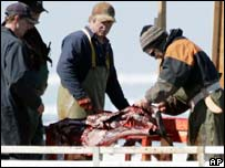 Cazadores remueven la piel de una foca en el Golfo de St Lawrence, Canadá.