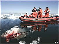 Anti-hunt protestors filming a seal carcass