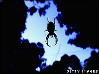 An Australian spider